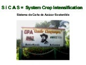 1506 - The System of Rice Intensification (SRI) and its Adaptation to Sugarcane in Cuba