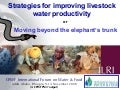 Strategies for improving livestock water productivity or moving beyond the elephant's trunk