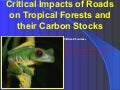 Critical impacts of roads on tropical forests and their carbon stocks