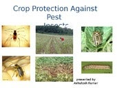 Crop protection against_pest_insect_