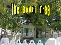 The Bodhi Tree...A Song of Inspiration