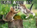 Cute Animals I