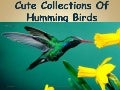 Cute Collections of Humming Birds