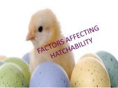Factors affecting hatchability - Dairy