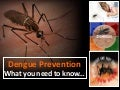 Dengue Prevention - What You Need To Know