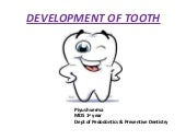 Development of tooth