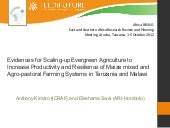 Evidence for scaling-up evergreen a...
