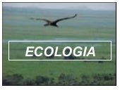 Ecologia   power point