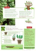 Chard - Organic Growing Guides for Teachers + Students