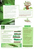 Pak Choi - Organic Growing Guides for Teachers