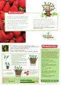Strawberries - Organic Growing Guides for Teachers