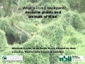 What's in my backyard? Invasive Plants and animals of Maui