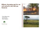 Effects of grazing and fire on soil carbon in dry african savanna