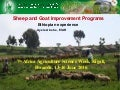 Sheep and goat improvement programs: Ethiopian experience