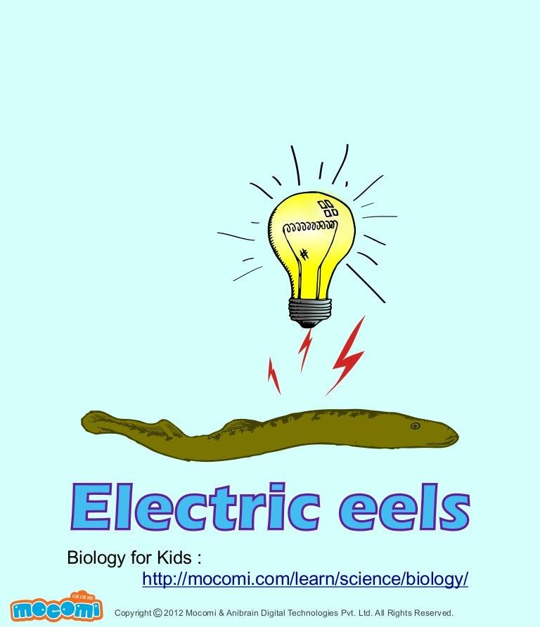 Eel Electrics Facts Electric Eels Facts Mocomi