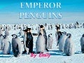 Emperor penguins by emily