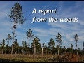A report from the woods