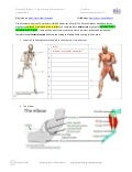 Essential Biology 11.2 Muscles and Movement AHL