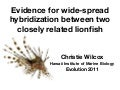 Evidence for widespread hybridization between two closely related lionfishes
