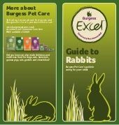 Excel Rabbit Care Guide