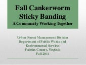 Fall Cankerworm Sticky Banding: A Community Working Together