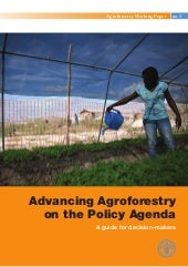 Fao agroforestry working paper