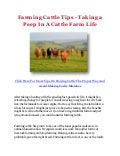 Farming Cattle Tips - Taking a Peep In A Cattle Farm Life