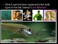 Fashion a Fish Lessonplan, Types of Fish, PowerPoint