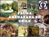 Fauna amenazada en_chile