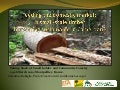 Feeding the domestic market: Is small-scale timber harvesting sustainable in Cameroon?