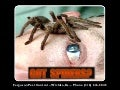 Wichita, Ks. Pest Control - Call Ferguson Phone (316) 616-5845