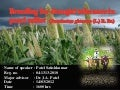 Breeding for Drought tolerance in Pearl Millet