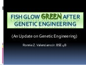 Fish glow green after genetic engin...