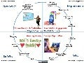 Flipped Classroom-Full Picture Presentation - 2013