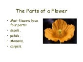 Floweringplants reproduction pp