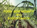 Food sovereignty, biodiversity, july 27, 2005