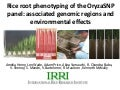 GRM2013: Rice root phenotyping of the OryzaSNP panel: associated genomic regions and environmental effects -- A Henry