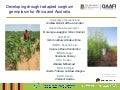 GRM 2013: Developing drought-adapted sorghum germplasm for Africa and Australia -- A Borrell