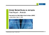 Gexsi Global Jatropha Study Abstract