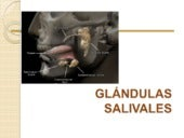 Glandulas salivales final