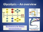 Glycolysis- An over view