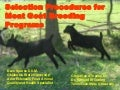 Beginning Farmer Livestock 2: Selective Procedures for Meat Goat Breeding Programs