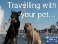 RSPCA - Go on holidays with your pet!