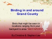 Birds of Grand County Colorado