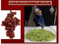 Grapes Blessing