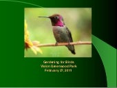 Gardening for Birds: Vision Greenwo...