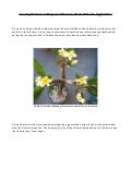 Growing Plumeria Cuttings and Plumeria Plants with the Egg Method