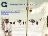 Gujarat ambuja exports ltd | Manufacturers & Exporters of Starch & Derivatives