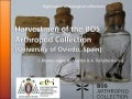 Harvestmen of BOS Arthropod Collection (University of Oviedo, Spain)