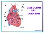 Heartdissection Traducida